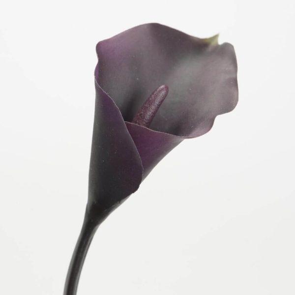 Dekoratyvinė gėlė KALIJA 45h baklažano bordo