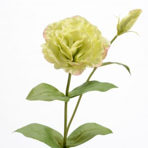 Dekoratyvinė gėlė EUSTOMA žalsva 60h