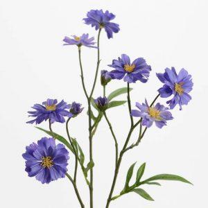 Dekoratyvinė gėlė rugiagėlė 63h