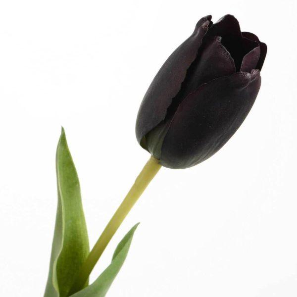 Dekoratyvinė gėlė TULPĖ juoda 65h