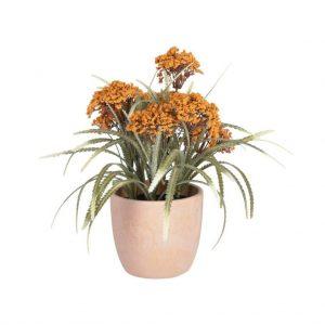 Dekoratyvinė gėlė LEONITIS 35x29h